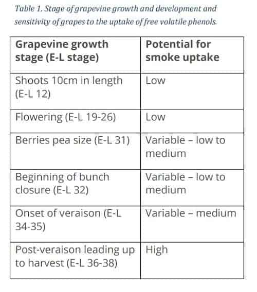 Stage of Growth of Grape Vines and How Smoke Affects Wine Grapes | Winetraveler.com