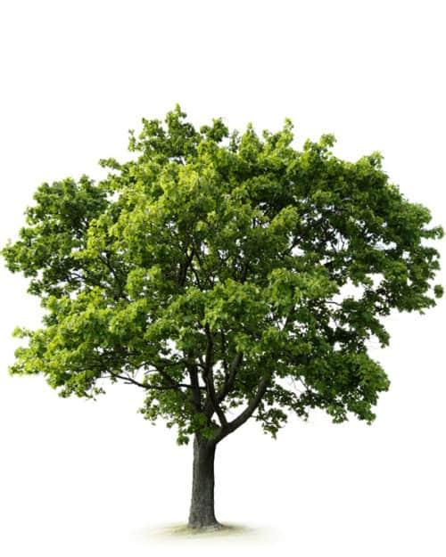 lifetree Outdoor Feldahorn