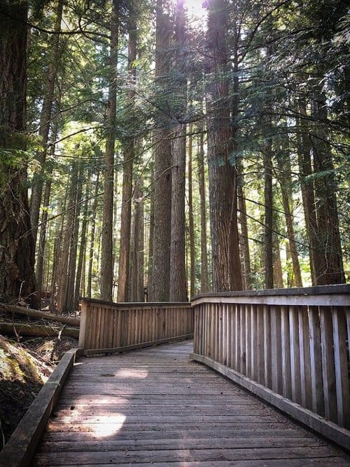 A boardwalk at hikes in North Cascades