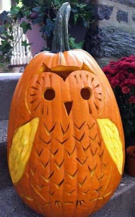 What a fantastic Owl Carving! I love this pumpkin!