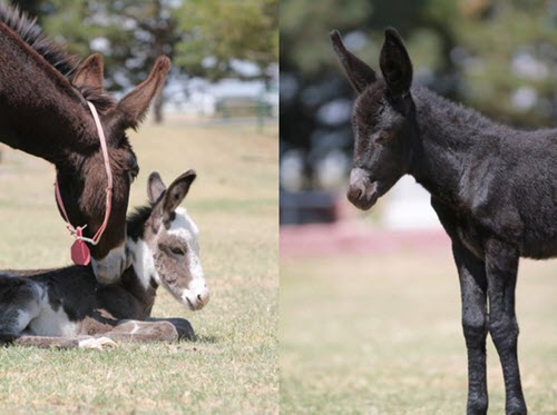 Longhopes Donkey Shelter - Rescues and Adoptions