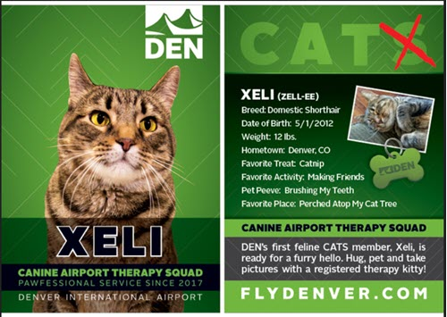 Xeli is the first feline member of the DIA CATS team
