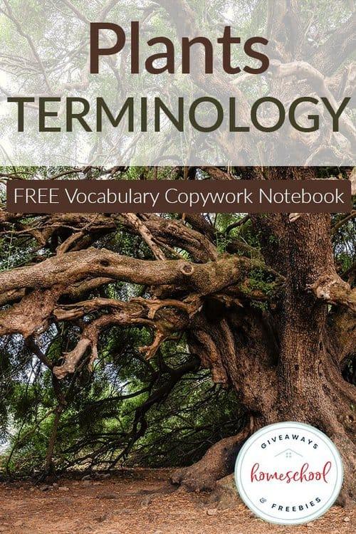 plants-terminology