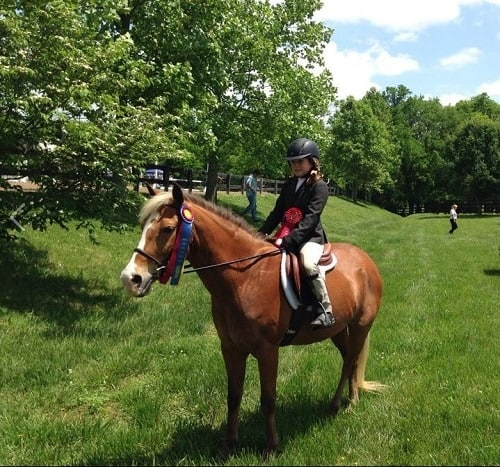 Sheriff: Animal Abuse Investigation Closed after Cumberland Riding Academy Incident
