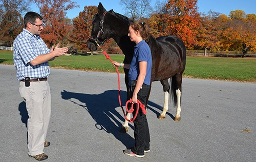 MRI Key to Diagnosing Dressage Horse's Lameness