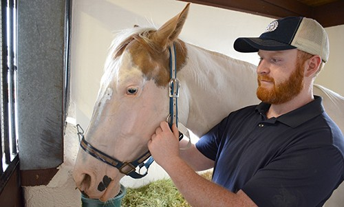 Laser Treatment Saves Rescue Horse's Eyes