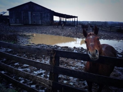 Kentucky's Walking Dead: Larry Browning's Horses