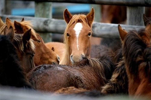 House Committee Blocks Defunding of Horse Slaughter