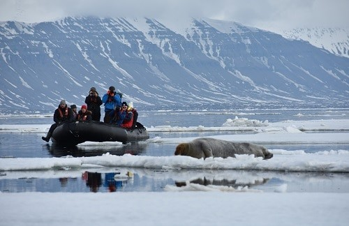 Take a Zodiac Excursion in Svalbard from the ship to see wildlife.