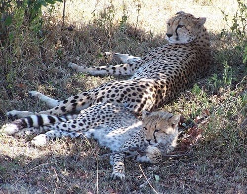 Best Time To Go on a Safari in Kenya