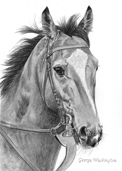 Pencil Drawing of Horse, George Washington
