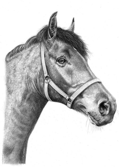 Pencil Sketch of Horse 2