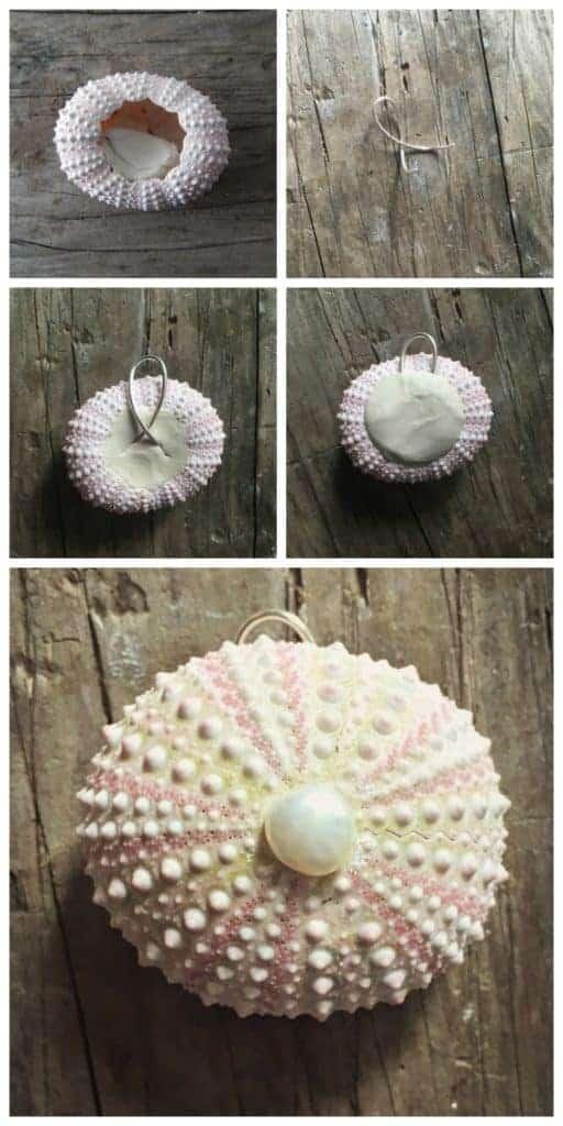 sea urchin 6