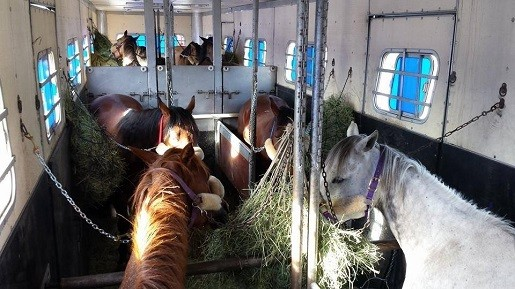 Commercial Horse Transportation: Understanding a Bill of Lading