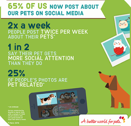 Influencer Marketing Statistics - Pets