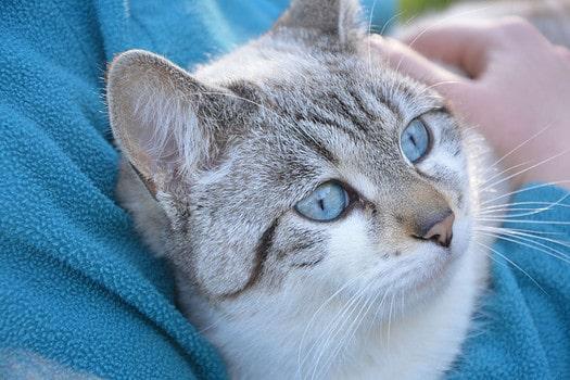 Котики в блоге