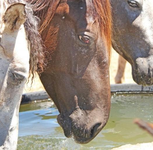 Horse Owners Urged to Vaccinate Against West Nile