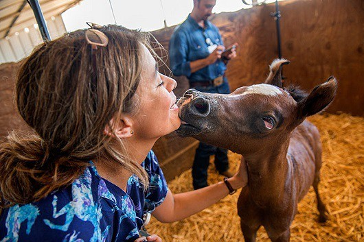 Newborn Foals May Share Clues for Autism