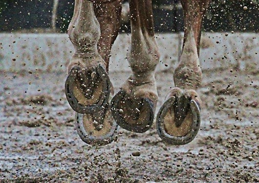 USEF Town Halls Focus on Drugs and Improved Coaching
