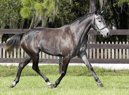 Selling Your Horse On Trial? 5 Provisions for a Horse Sale & Trial Agreement