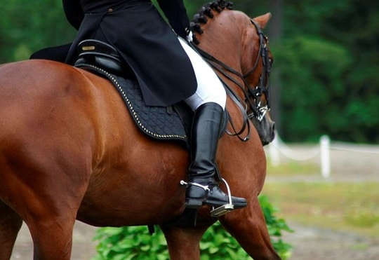 Optimal Fitness for Equestrians