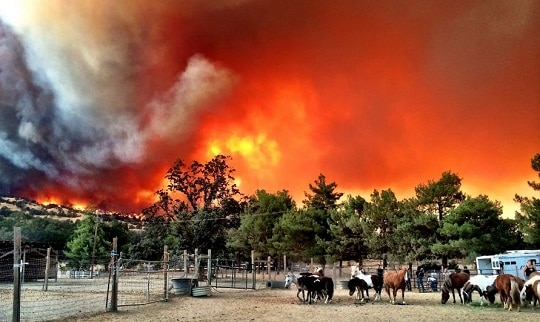 10 Tips for Protecting Horses when Wildfires Threaten