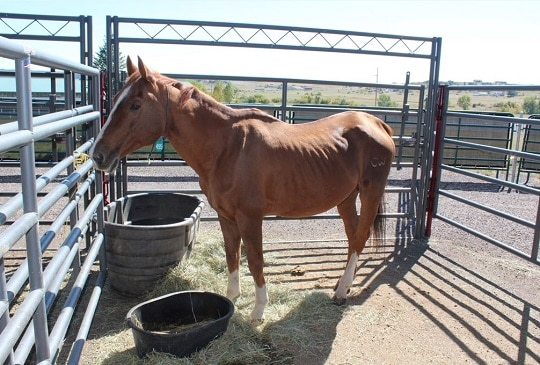UPDATE: New Photos Show Sherri Brunzell's Horses Emaciated in September 2013