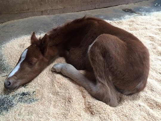 Rescued 'Valentine' Colt on the Mend
