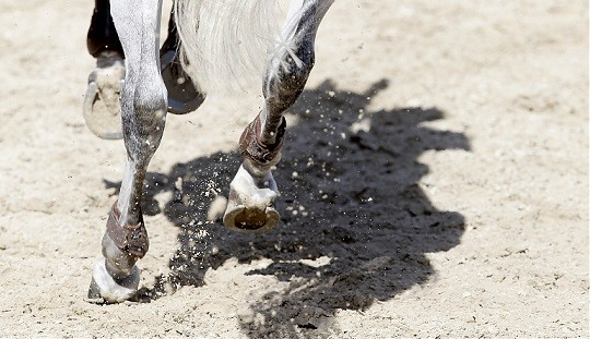 No Penalty for Equestrians Competing in Global Champions League