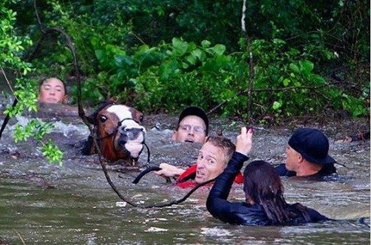 Hero Saves 25+ Horses from Houston Flooding
