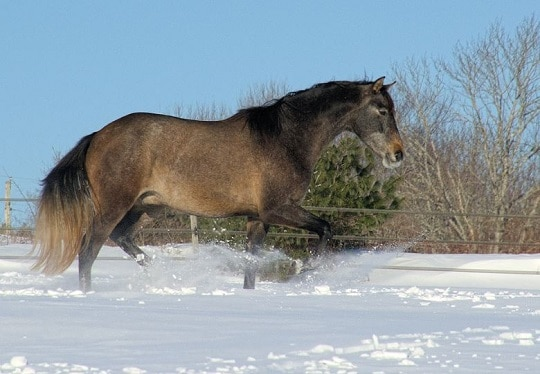 6 Horse Health Tips for Cold Weather