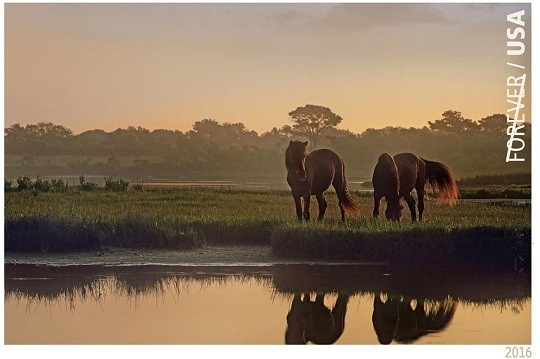 Assateague Ponies Appear on 2016 Postage Stamp