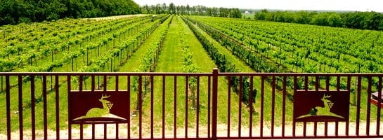Grace Hill Winery Vineyard in KS