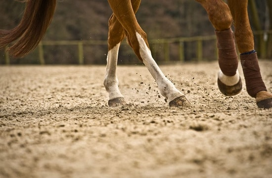 Equine Sales Contract Essentials