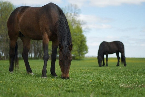 Virginia Horse Dies from West Nile Virus