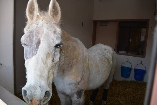 Horse Dealer Charged in Paintball Horse Abuse Case