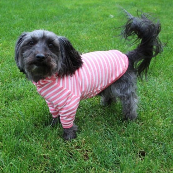The Tailoress PDF Sewing Patterns - BUNDLE - Bella Pyjamas Toby Jumper Jasra Tee for Dogs PDF Sewing Pattern
