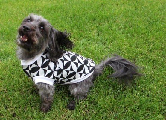The Tailoress PDF Sewing Patterns - Jasra Tee for Dogs PDF Sewing Pattern
