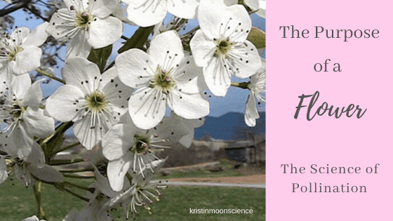 The purpose of a flower and the science of pollination