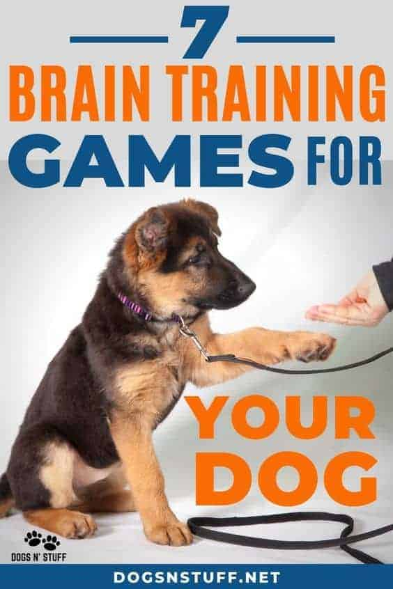 brain boosting mental exercises for dogs