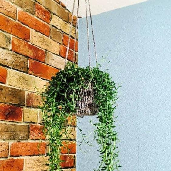 Crochet Plant Hanger