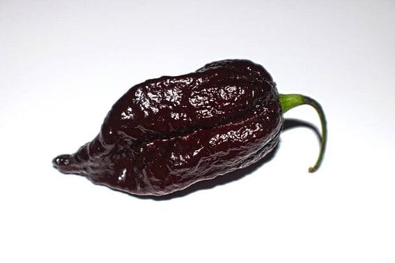 Chocolate Bhutlah Pepper appearance