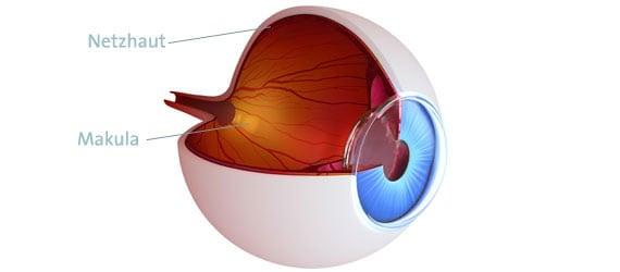 Netzhaut und Makula Auge Erklärung Funktion