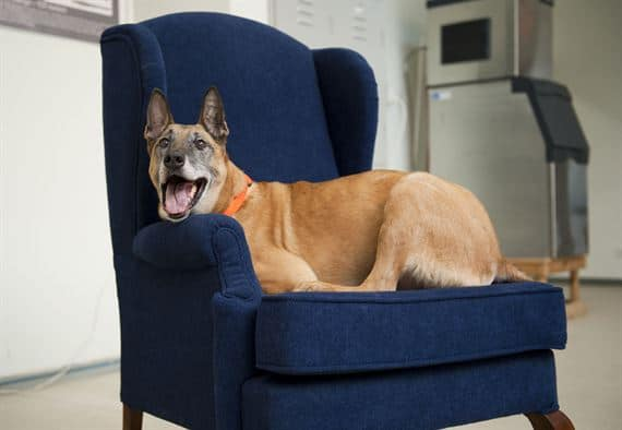 dog on a blue chair