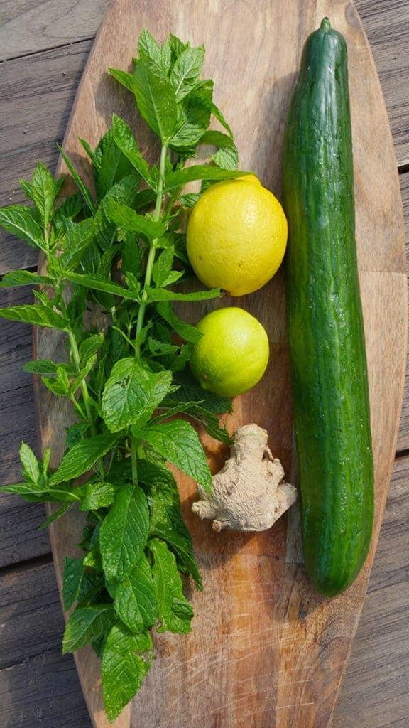 Gurke ist reich an Antioxidanzien