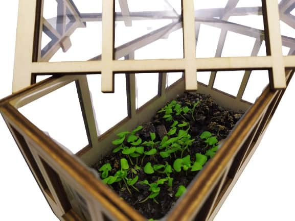Image shows the greenhouse, the lid has been placed at an angle to allow viewing access to the small basil that's growing.