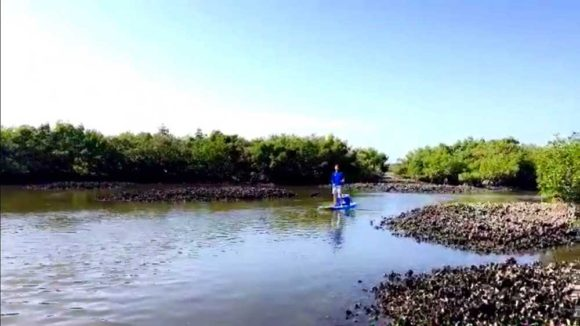 Oyster beds you encounter when you kayak New Smyrna Beach waterways. (Photo: Richard Barrett)