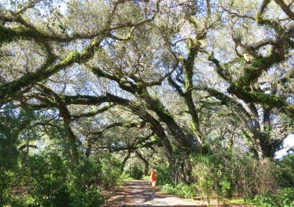 pine island ridge hike Florida birding trail: Website helps you find places to explore & see wildlife