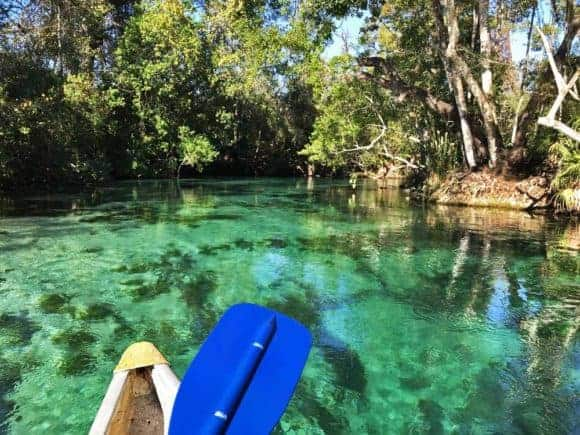 Weeki Wachee Springs has such a large flow of crystalline water that it replaces the water in the river every 60 minutes, making the water spectacularly clear and clean. (Photo: Bonnie Gross)