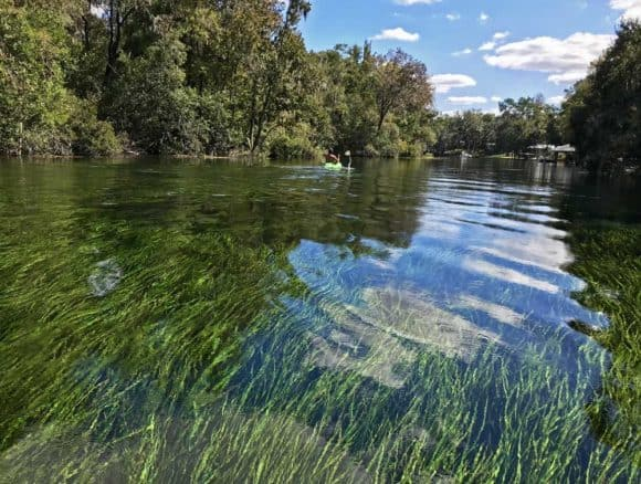 The water in the Rainbow River is so clear you see the bright-green eel grass waving in water. (Photo: Bonnie Gross)